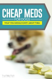 Top Cheap Pet Meds Online