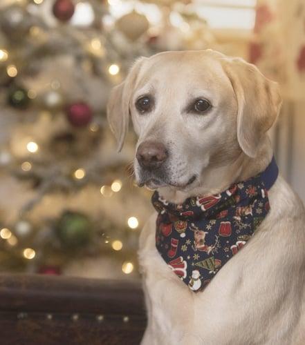 best Christmas dog bandanas