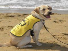 Charity Group Seeking Volunteers to Raise Puppies