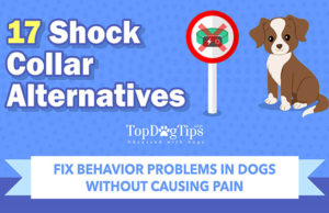 17 Alternatives to Shock Collars for Dogs