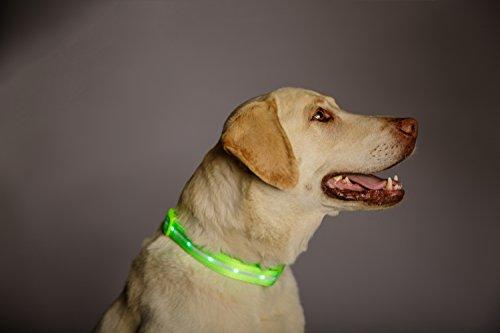 Blazin' Bison Safety LED Dog Collar