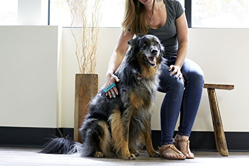 PetWell Massage Tools for Dogs Massaging Groomer De-Shedding Brush