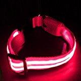 best light up dog collar
