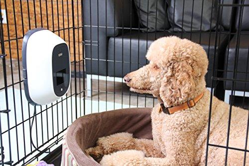 PetChatz HD Pet Camera Giveaway