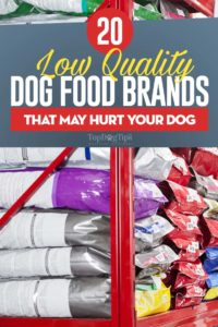 Bad Dog Food Brands
