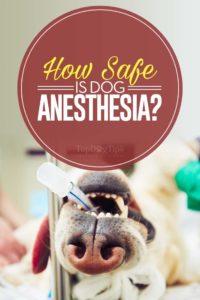 Dog Anesthesia Safety