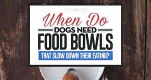 Best Slow Eating Dog Bowls