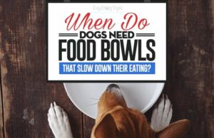 Dog Food Bowls That Slow Down Eating in Dogs