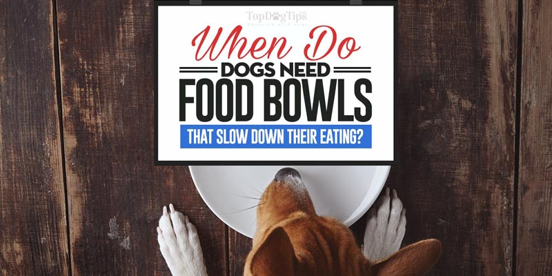 Dog Food Bowls That Slow Down Eating: When Do You Need One? - photo#34