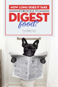 How long does it take for dogs to digest food