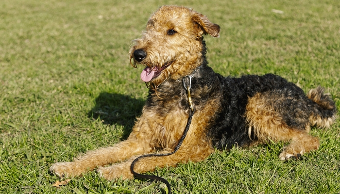 Breeds Of Dogs That Don T Need Much Exercise