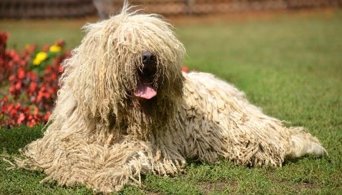 House Dog Breeds List