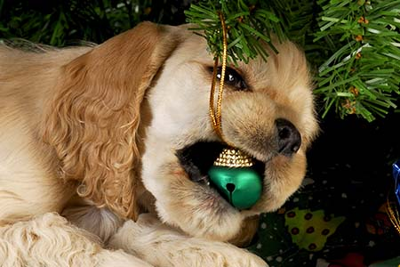 Ornaments and Gifts Dangers for Dogs