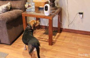 Pawbo Pet Camera Review