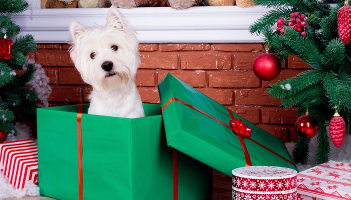 Reasons Why You Shouldn't Gift Dogs for Christmas