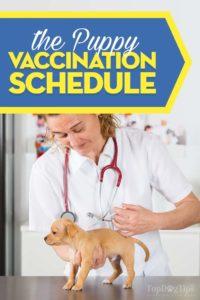 The Puppy Shot Schedule