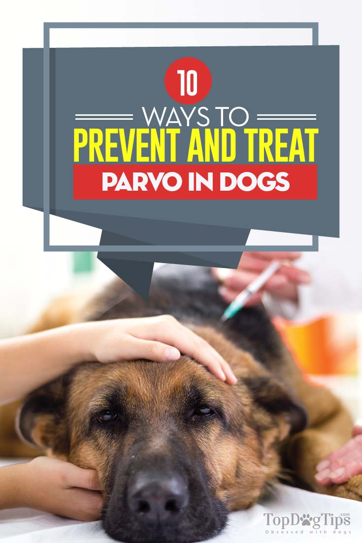 Dog Parvo 10 Most Effective Ways To Prevent It Based On Science