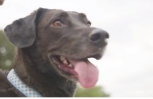 Loving Dog Predicts Owner's Pregnancy