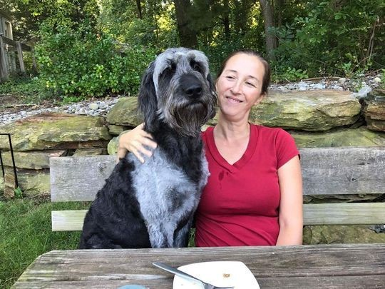 Woman Searches For Her Lost Dog and Finds 8 Others In the Process