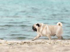 slowest dog breeds