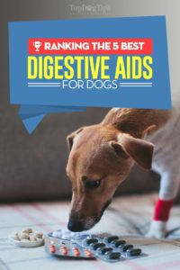 Best Digestive Aids for Dogs