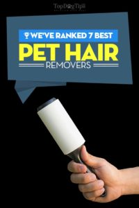 Best Dog Hair Remover