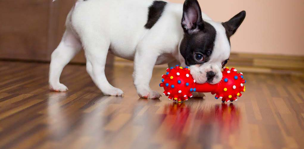 The Best Chew Toys For Dogs