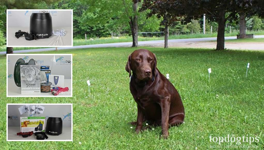 Best Invisible Dog Fences That Are Safer for Dogs