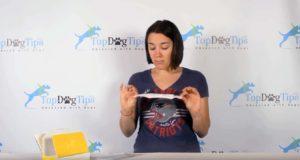 Best dog DNA kit test comparing