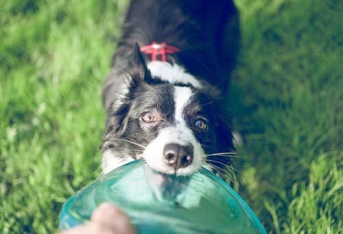 Dog Frisbee introduction