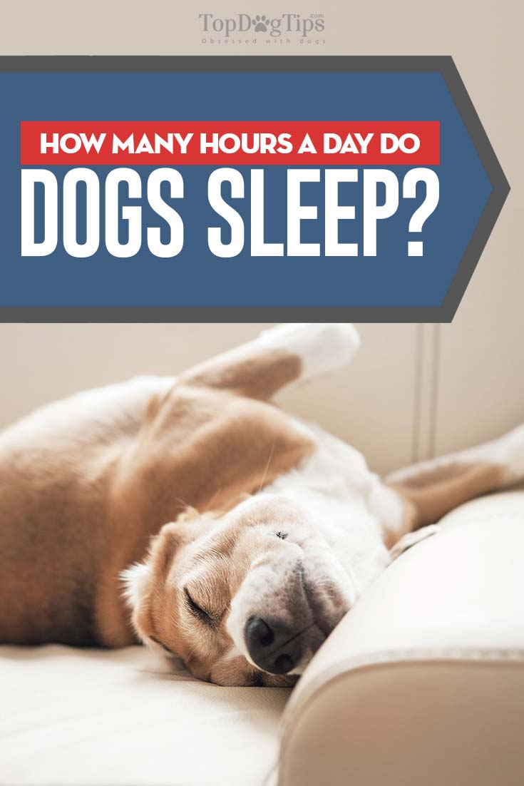 How Many Hours A Day Do Older Dogs Sleep