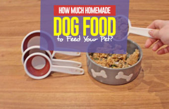 How Much Homemade Dog Food to Feed Your Dog - The Guide