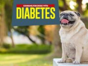 Dog Diabetes Diet: What to Feed a Diabetic Dog