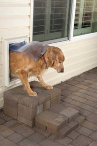 How to pick the best pet door for your dog