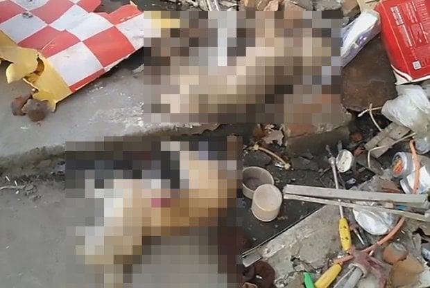 Owner Slams Dog Thief Dead Through Wall With Car