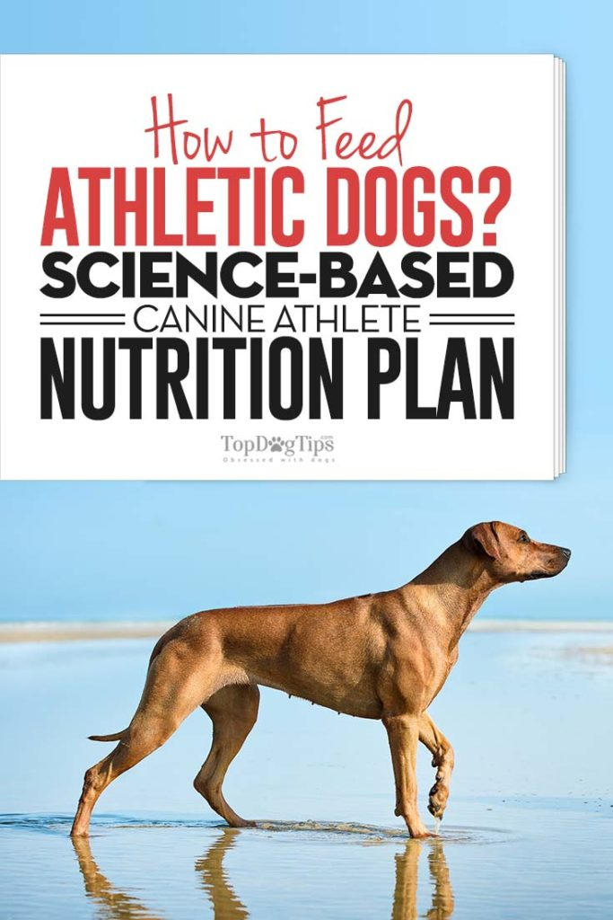 Science Guide on How to Feed Athletic Dogs