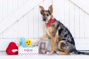 Surprise Pawty Dog Box