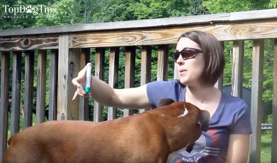 Testing the best Dog dna kits