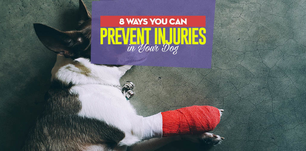 The 8 Ways to Prevent Injuries in Dogs