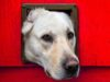The Best Dog Door for Walls and Doors