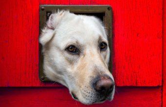 The Best Dog Door for Walls and Doors