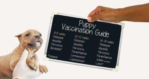 The Detailed Puppy Shot Schedule