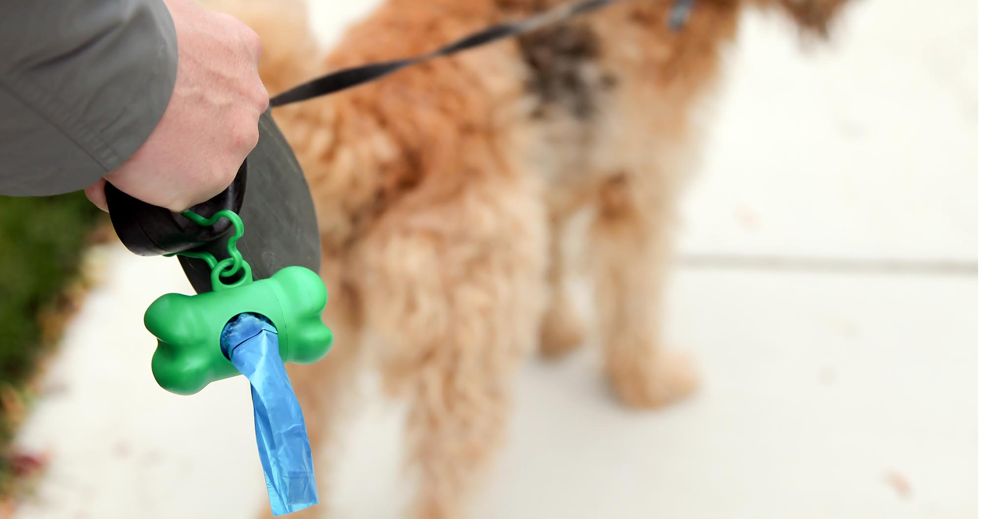 Top 50 Best Dog Poop Bags