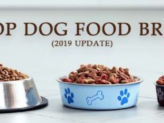 Top Dog Food Brands