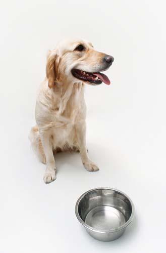 Homemade Dog Food For Dog With Bladder Stones