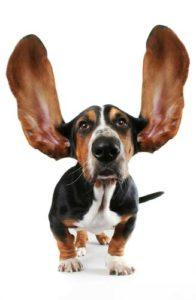 Dog Ear Facts