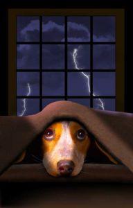 Dog's Fear of Loud Noises