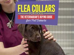 Flea Collar for Dogs - Vet's Buying Guide