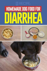 Homemade Dog Food for Diarrhea Recipe