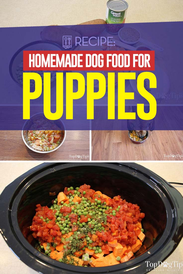 Homemade Dog Food For Puppies Recipe Healthy And Easy To Make